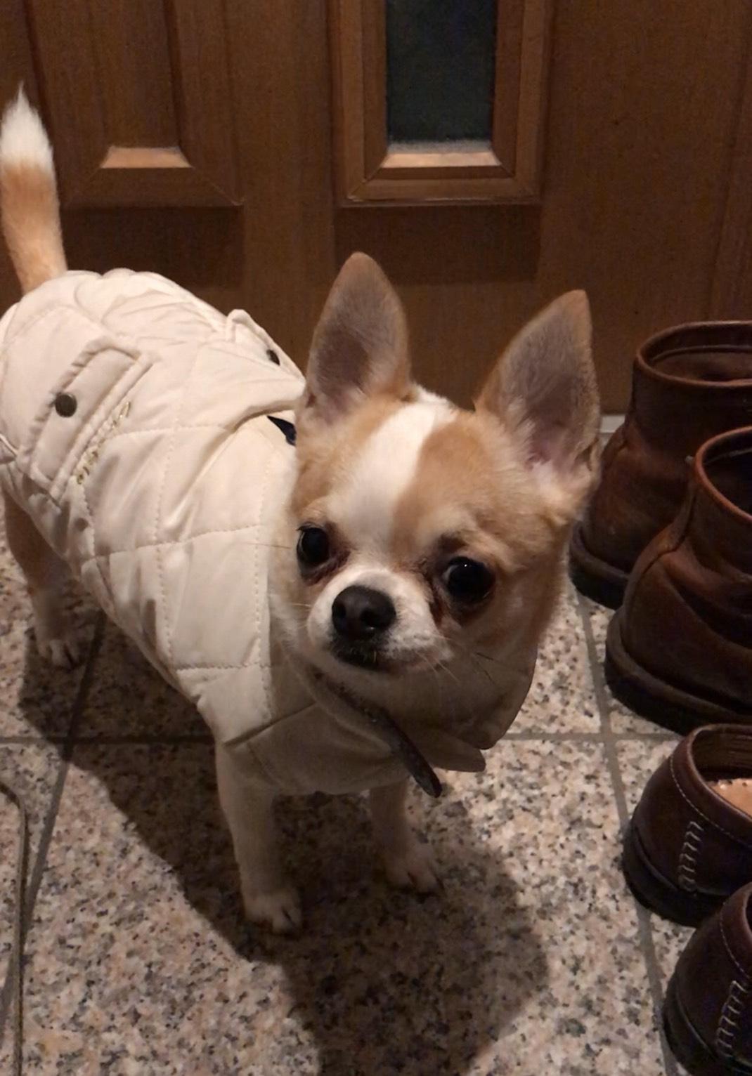 trainer's dog_3